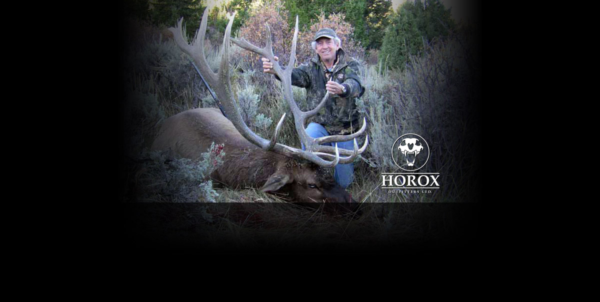 Horox Ltd Bull Elk
